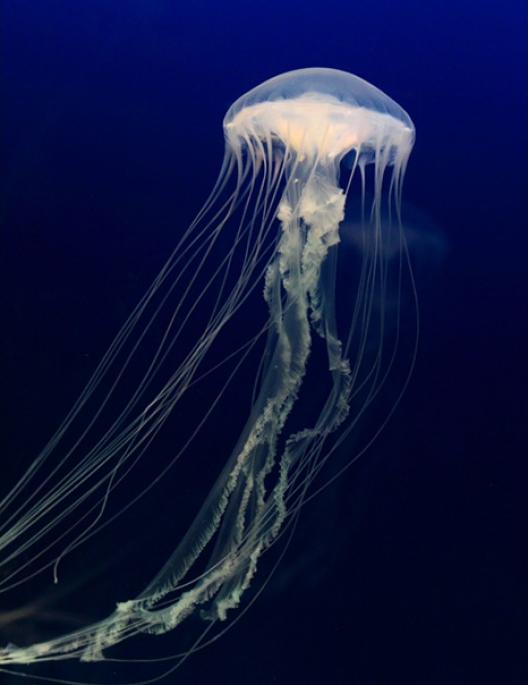Cubic orbit 20 desktop jellyfish tank pet jellyfish for Tap tap fish light jellyfish
