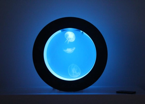 Cubic Orbit 20 with Blue LEDs and Moon Jellyfish