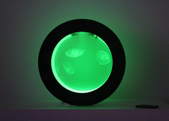 Cubic Orbit 20 with Green LEDs and Moon Jellyfish