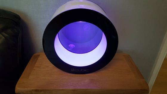 Cubic Orbit 20 Jellyfish Tank with 2 Moon Jellyfish