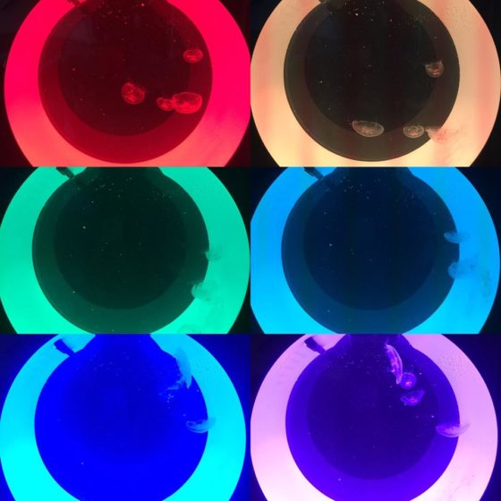 Different colour LED lighting of the Cubic Orbit 20
