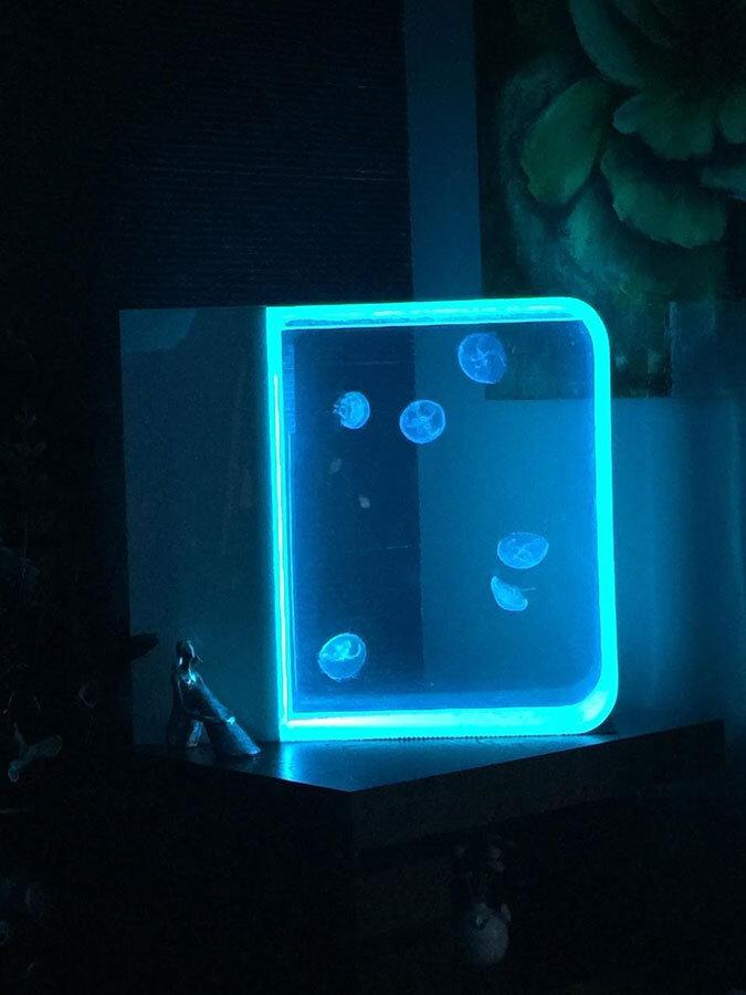 Customer gallery pet jellyfish for Jelly fish aquarium