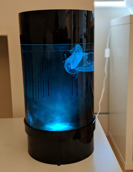Jellyfish Art Cylinder Nano Blue