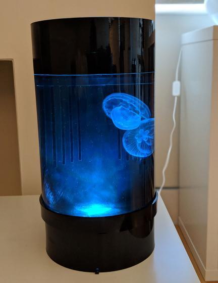 Jellyfish Art Cylinder Nano Blue 2
