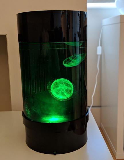 Jellyfish Art Cylinder Nano Green