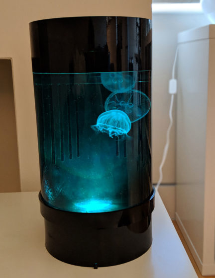 Jellyfish Art Cylinder Nano Green-Blue