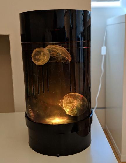 Jellyfish Art Cylinder Nano Orange