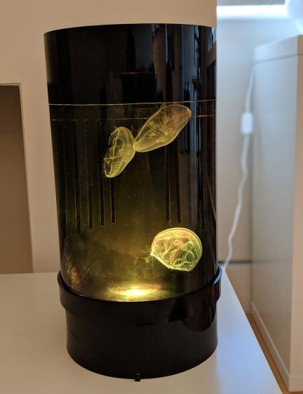 Jellyfish Art Cylinder Nano Yellow-Orange