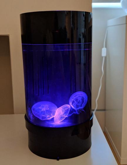 Jellyfish Art Cylinder Nano Purple