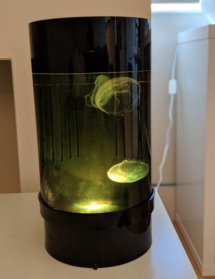 Jellyfish Art Cylinder Nano Yellow